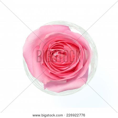 Isolate Pink Rose, A Top View Closeup Photo Image Of Single Pink Rose In A Glass Isolate On White Br