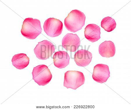 Pink Rose Petal, A Top View Closeup Photo Image Of Pink Rose Petals Isolate On White Background Pres