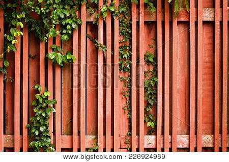 Brown Wood Fence With Green Creeper Plant