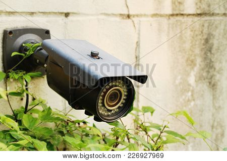 Closed Circuit Camera (cctv) In Garden With Nature