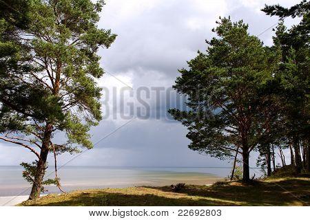 Pines at sea.