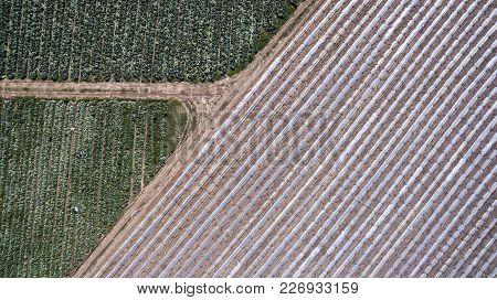 Aerial View Of Road Junction Next To Sown Field With Growing Crops In Israel