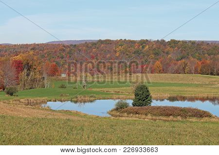 A Pond With Geese And A Shed With Colorful Fall Trees In The Background.