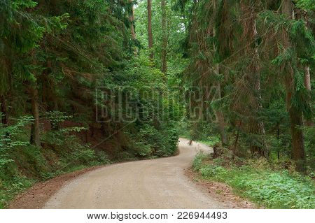 Walkway Of Tall Old Green Trees, The Old Dirt Road Between The Tall Trees