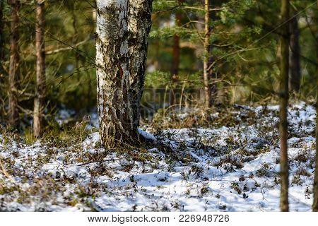 Frozen Naked Forest Trees In Snowy Landscape