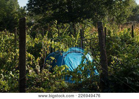 Blue Tent In Vineyard