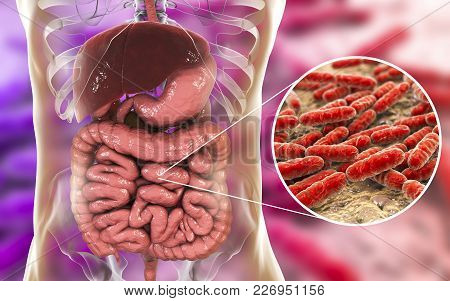 Normal Flora Of Small Intestine, Bacteria Lactobacillus, 3d Illustration. Lactic Acid Bacteria. Prob