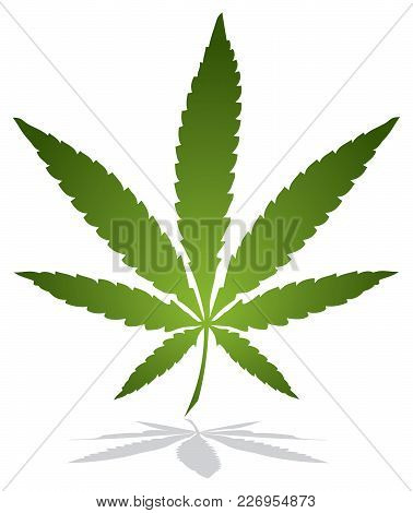 Single Marijuana Leaf And Shadow Vector Illustration