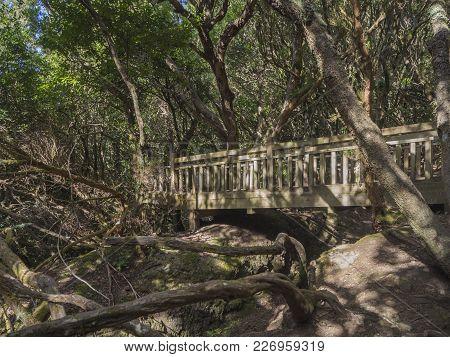 Wooden Bridge On Footpath Sendero De Los Sentidos Path Od The Senses In Mystery Primary Laurel Fores