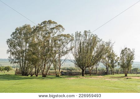 An Early Morning Farm Scene At The Koranna Mountain Near Excelsior In The Free State Province Of Sou
