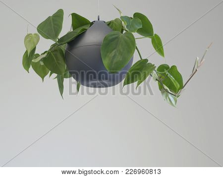 Green Office Plant Hanging In Gray Bowl Flower Pot Basket On White Wall Background