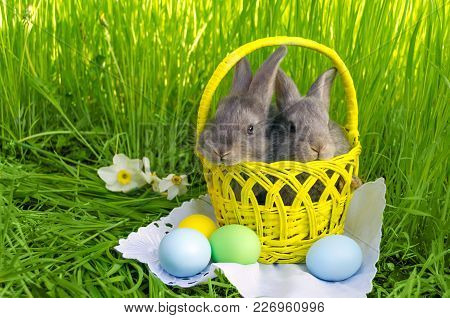 Easter Bunnies In Easter Basket With Easter Colored Eggs On Grass Background.