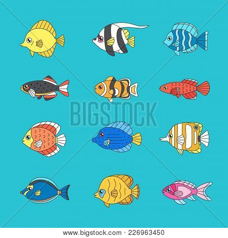 Fish Outline Multicolored Vector Icon Set (tropical, Marine, Oceanic, Freshwater).