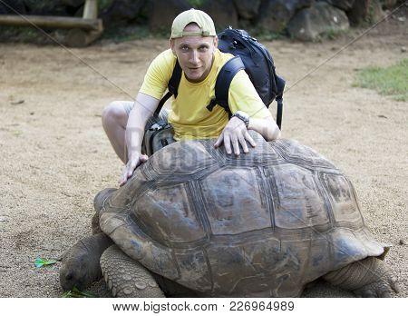 Smiling Man Pats Big Seychelles Turtle Aldabrachelys Gigantea  .
