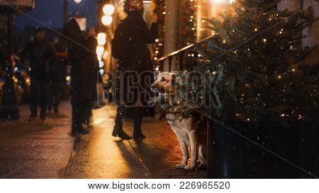 A Stray Dog In The City. Night On The Street