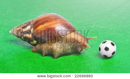 Huge Snail Play With Soccer Ball