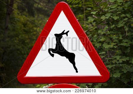 Traffic Deer Road Warning Sign, Spain Nature