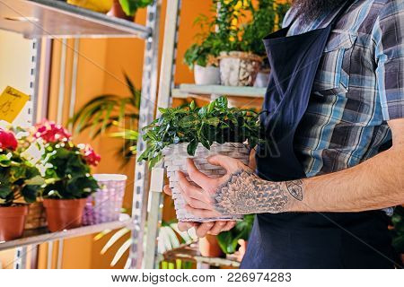 Bearded Male With Tattooed Arms Holds A Pot With Flowers.