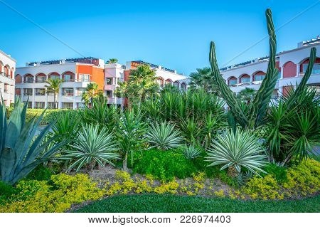 Playa Del Carmen, Mexico - March 25, 2017: A Beautiful Cactus Garden On The Grounds At The Hard Rock