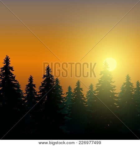 Landscape With Coniferous Forest Under Morning Sky At Dawn And Sunlight - Vector With Space For Text