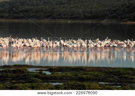 Reflected Colorful Flamingos Against A Dark Background Creates A Wonderful Background Or Backdrop