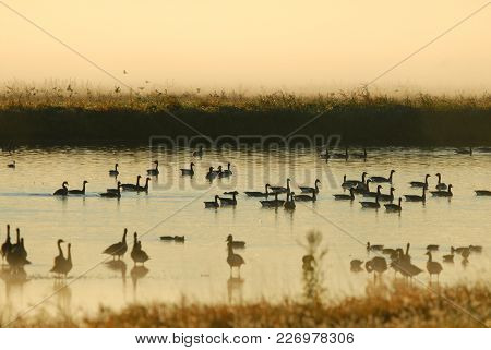 The Sun Is Rising And Burning Off The Fog Exposing The Many Residents Of The Wildlife Refuge.