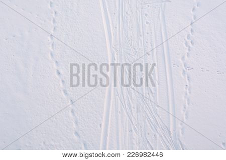 Footprints From A Snowmobile In The Snow. Footprints From Skis In The Snow. Footprints In Fresh Snow