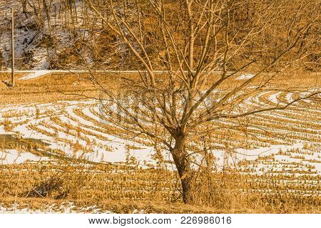 Rural Winter Landscape Of Isolated Bare Leafless Tree With Snow Covered Field And Hillside In Backgr