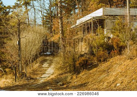 Old Abandoned White Building Next To A Disused Piece Of Road Surrounded By Bushes, Trees And Old Ele