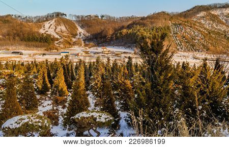 Winter Landscape Of Grove Of Young Pine Trees With Farm Houses And Snow Covered Field And Hills In B