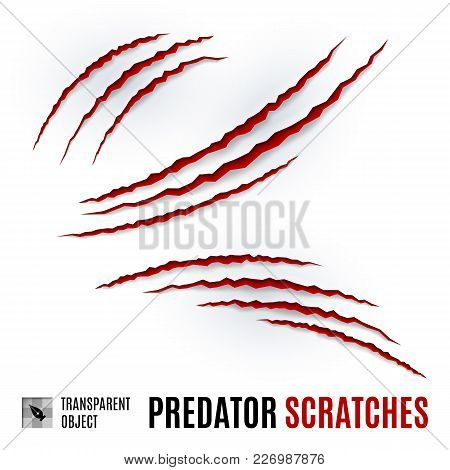 Animal Red Scratches On White Background. Claw Scratch Mark. Animal Predator Paw Claw, Knife Scratch