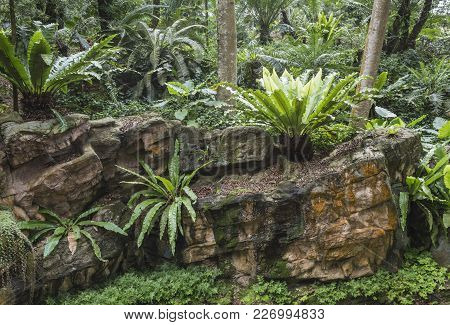 Wet Fresh Plants Growing On Mossy Rock Formation In Tropical Forest
