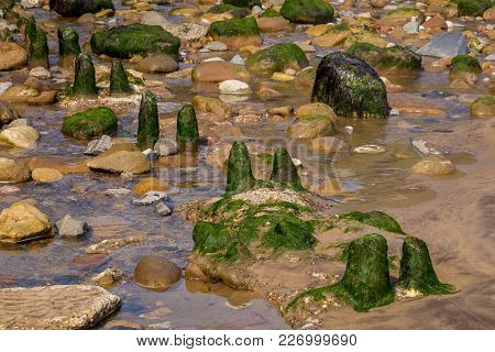 Stones And Seaweed, Seen At Sandsend Beach Near Whitby, North Yorkshire, Uk