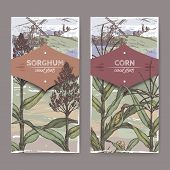 Set of two vintage labels with Sorghum bicolor and Corn aka Maize or Zea mays color sketch and field landscape. Cereal plants collection. Great for bakery, agriculture, farming design. poster