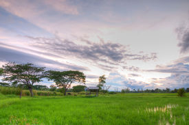Hut in the rice field in sunset backgroud