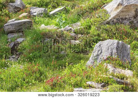 Rocks And Beautiful Flowers Along The Path At Mount Baker Artist Point Snoquamish Washington