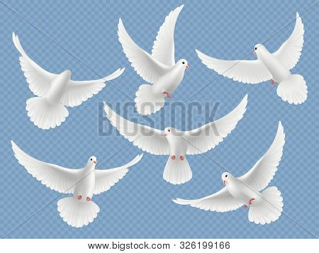 Realistic Doves. White Freedom Flying Birds Pigeons Religion Symbols Vector Pictures Collection. Set