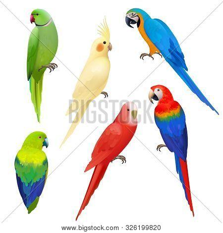 Parrots Realistic. Wildlife Flight Exotic Colored Birds Beautiful Amazonia Tropical Life Vector Parr