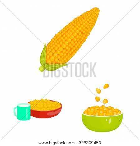 Vector Illustration Of Maize And Food Icon. Collection Of Maize And Crop Stock Symbol For Web.