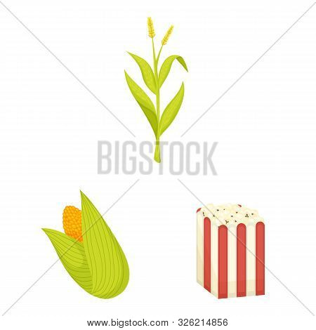 Vector Design Of Maize And Food Symbol. Collection Of Maize And Crop Stock Symbol For Web.