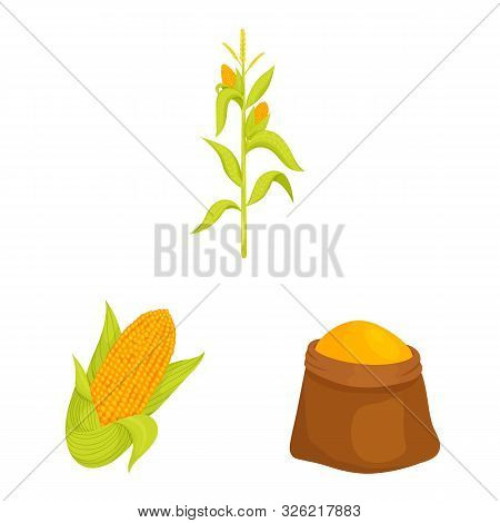 Vector Design Of Maize And Food Sign. Collection Of Maize And Crop Vector Icon For Stock.