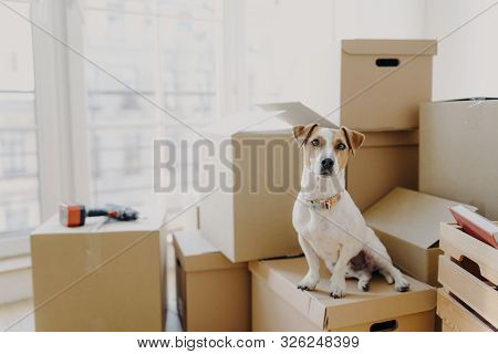 Horizontal Shot Of Domestic Animal Sits On Stack Of Carton Boxes, Relocates In New Abode, Poses In S