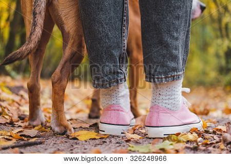 Human And Dog's Feet Among Autumn Leaves, Rear View. Close-up Shot Of Sneakers And Dog's Legs Side B