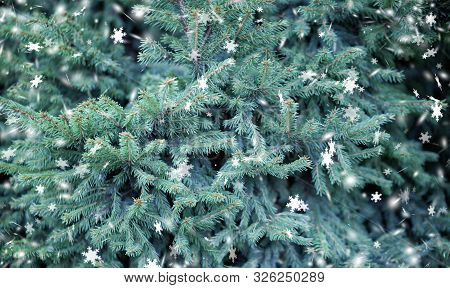 Abstract, Art, Background, Background Blue ,bright, Christmas, Christmas Tree, In The Forest, Close-