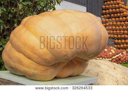 Giant Orange Pumpkin With Strange Strange Form,