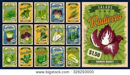 Salad Greens And Leaf Vegetables Vector Design With Organic Farm Food. Lettuce, Spinach And Chinese