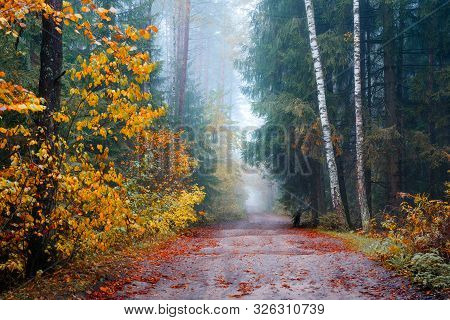 Autumn Forest. Scenic Fall Landscape. Path Through Autumn Forest With Mist And Trees With Yellow Lea