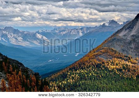 Scenic View Of Mountains And Yellow Autumn Larch Trees In Lake Louise Area In Canadian Rockies. Fair