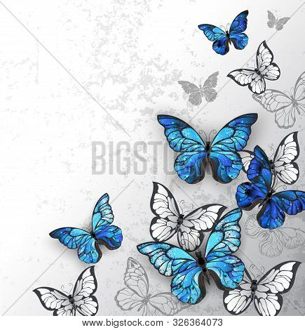 Blue And White, Realistic Butterflies On Gray Textured Background.