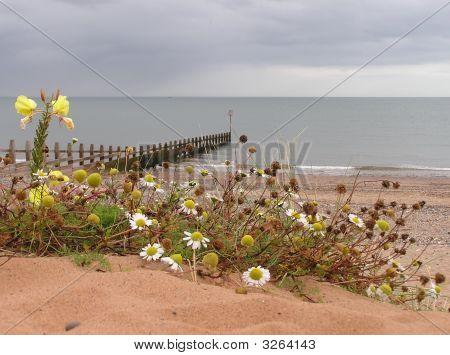 Devon Seaside In September